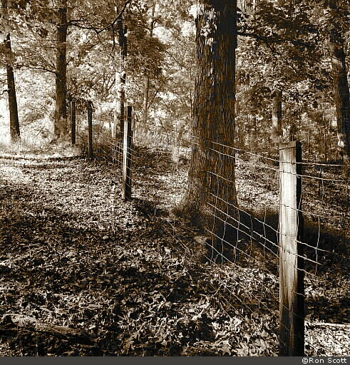 Fence and Trees ©Ron Scott