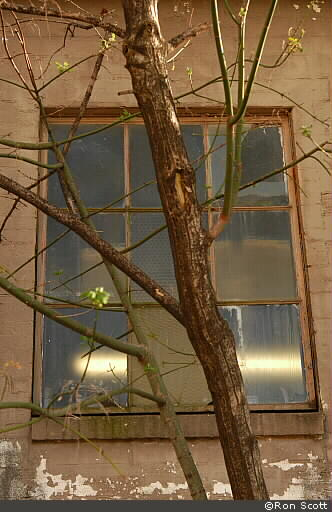Tree Window ©Ron Scott