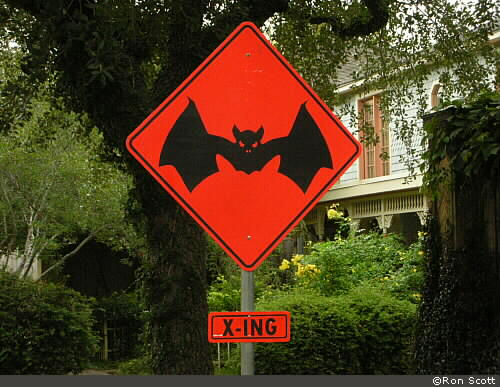 Bat Crossing ©Ron Scott